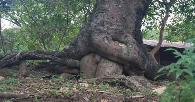 20 Innocent Pictures From Nature That Look Just Wrong