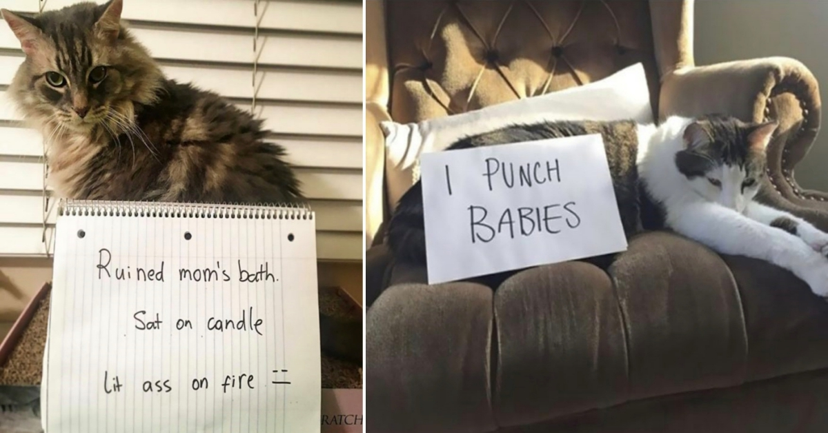 15 Cats Who Had To Face The Ultimate Punishment For Their Crimes