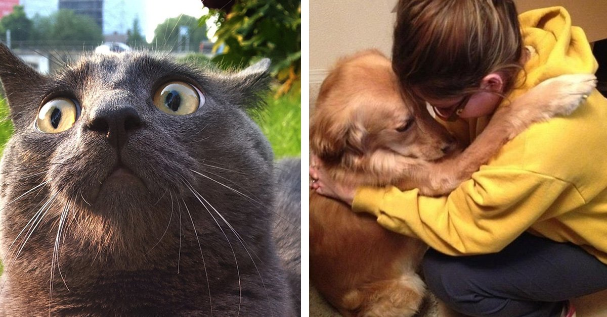 20 Reasons Why ANIMALS Are 100% BETTER Than Humans
