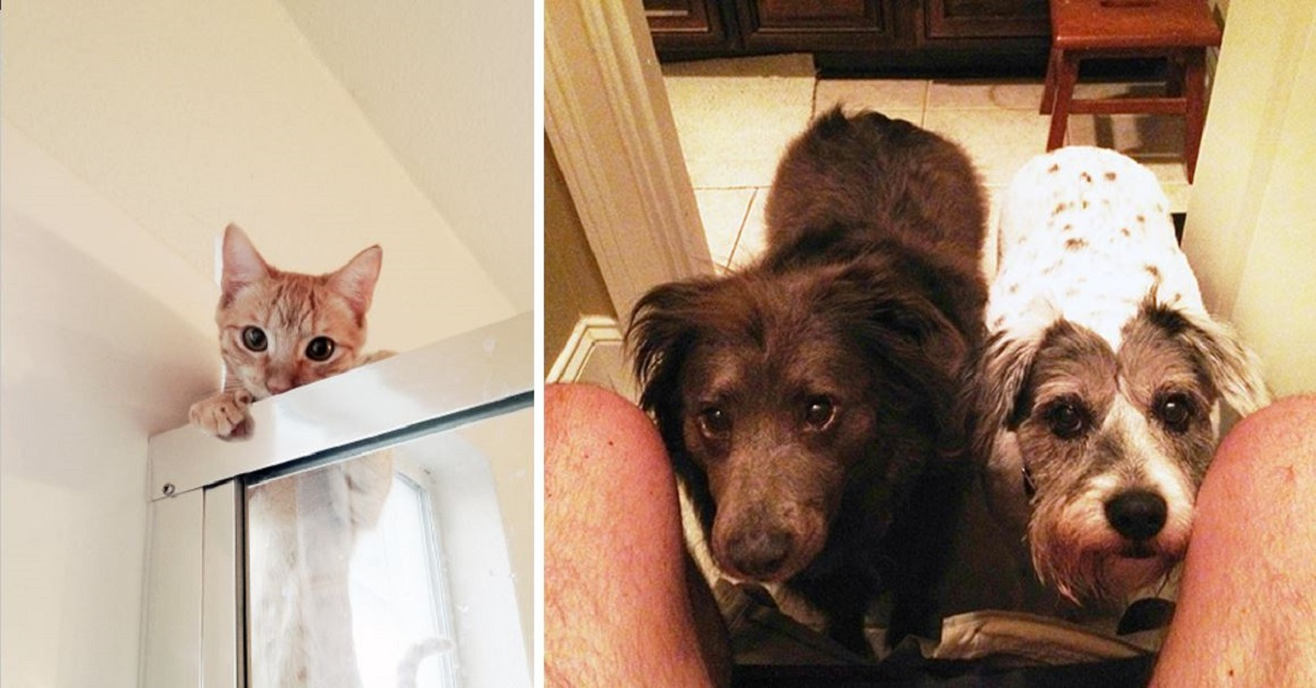 10+ Pets That Have No Time For Privacy