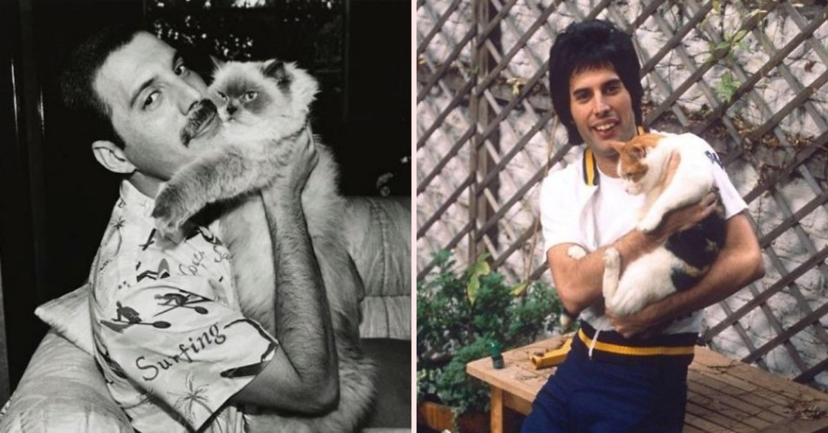 20 Adorable Pictures Of Freddie Mercury With His Beloved Cats