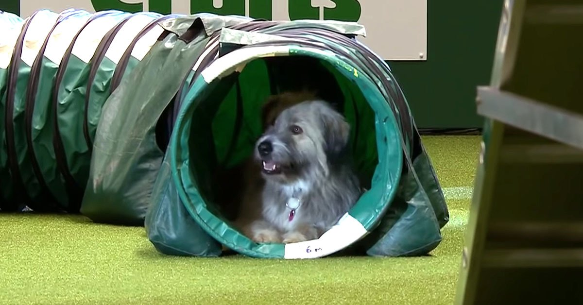 This Rescue Dog Gave The Worst Crufts Performance There Has Ever Been But Everyone Fell In Love