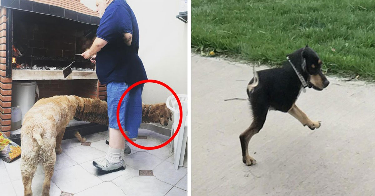 15 Hilarious Panoramic Photo Fails People Took Of Their Pets
