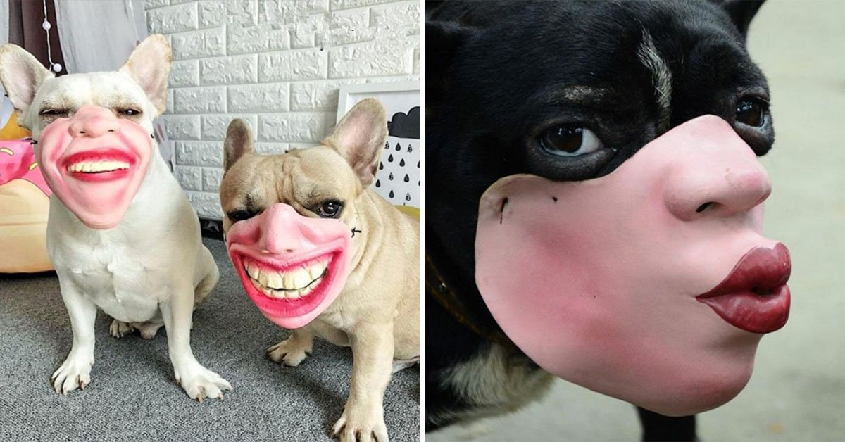 Human-Face Dog Muzzles Exist And Are Making Our Pooches Look Like The Stuff Of Nightmares