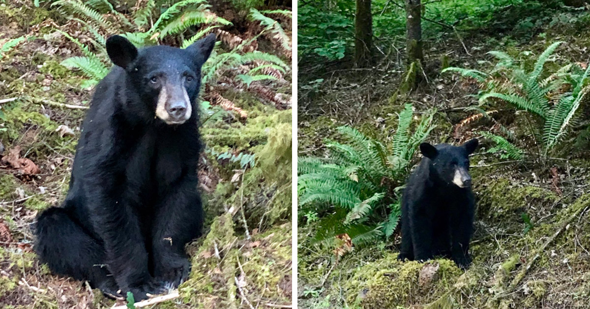 Heartbreak As Wildlife Officials Are Forced To Shoot Baby Bear After Humans Feed It Too Much