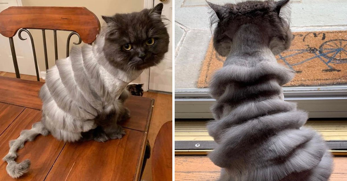 Viral Family Cat Gets Bizarre Haircut And Ends Up Looking Like A Slinky, Much To Owner's Dismay
