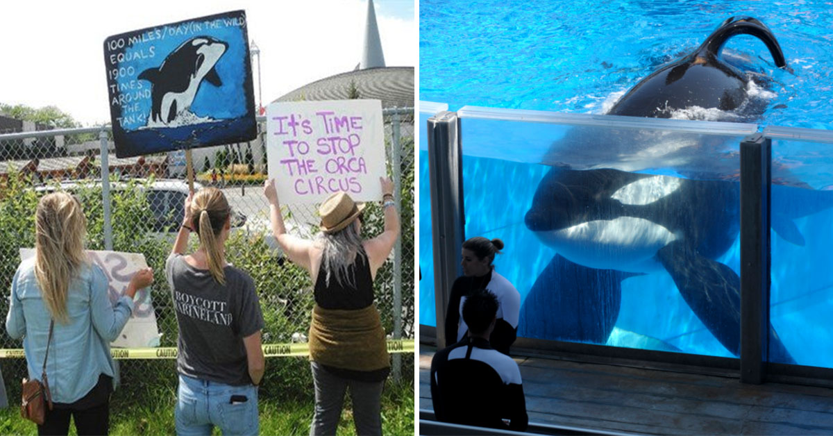Canada Passes 'Free Willy' Bill Outlawing Whale And Dolphin Captivity