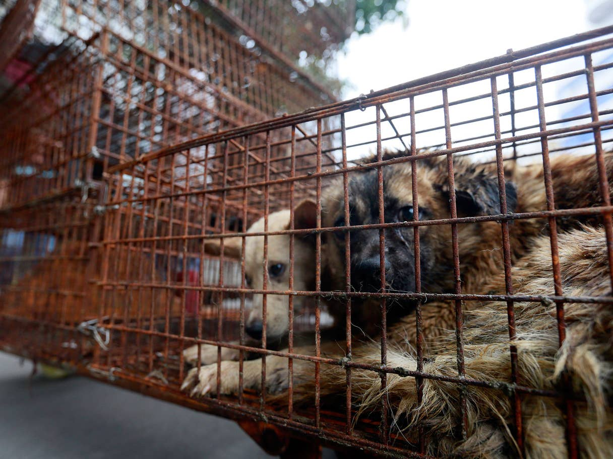Activists Launch Campaign Against China's Yulin Dog Meat Festival